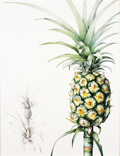 Ananas comosus, Lesley Ann Sandbach, 2015